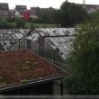 0009-unwetter-hagen-ueberschwemmung-baum-auf-auto